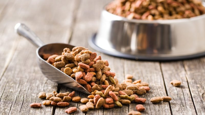 Tips to Pick the Best Dog Food Products